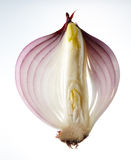 Onion. An onion sliced into half Royalty Free Stock Photo