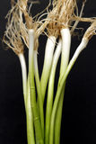 Onion. The onion, a condiment, a pungent smell, taste delicious stock images
