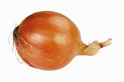 Onion. One fresh onion isolated on white background Royalty Free Stock Images