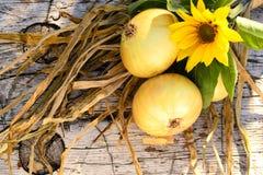 Onion... stock photo