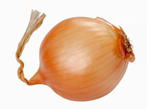 Onion. One fresh onion isolated on white background Stock Image