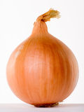 Onion. On a white background royalty free stock photography