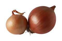 Onion Stock Photo