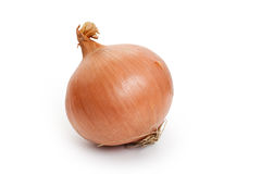 Free Onion Royalty Free Stock Photo - 35283605