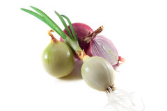 Onion. On a white background stock images