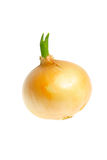 Onion. Isolated on white background Stock Image