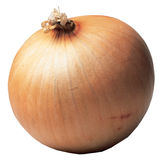 Onion. Single onion Royalty Free Stock Image