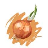 Onion. Art. Vector illustration of onion Royalty Free Stock Image