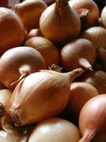 Onion. Background Royalty Free Stock Photos