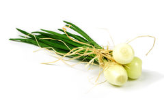 Onion. Bunch of small onion with chives Stock Image
