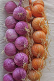 Onion, Allium cepa. At marketplace, Pune, Maharashtra, India Royalty Free Stock Photography