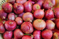 Onion or Allium cepa Stock Photo