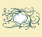 Onion b Stock Images