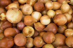 Onion background royalty free stock photography