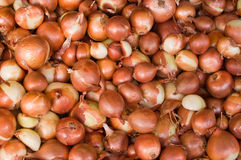 Onion background Royalty Free Stock Images