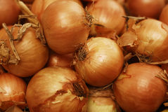 Onion background. Background with close-up gold onion Royalty Free Stock Images