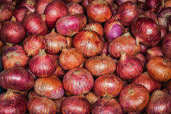 Onion background Royalty Free Stock Image