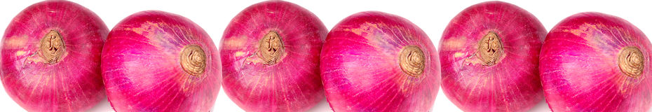 Onion banner Royalty Free Stock Photo