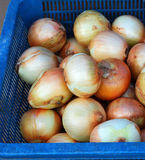 Onion in basket Stock Photography