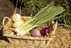 Onion basket Royalty Free Stock Photos