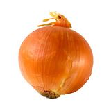 Onion bulb. Closeup isolated on white background Royalty Free Stock Photo
