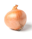 Onion bulb isolated on white Royalty Free Stock Photography