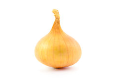 Onion bulb Royalty Free Stock Images