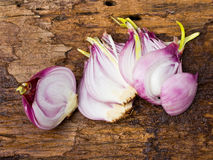 Onion bulb and sliced onions Stock Image