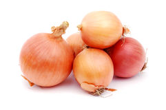 Onion bulbs Stock Image