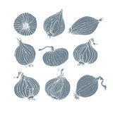 Onion bulbs illustration Royalty Free Stock Image