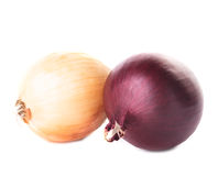 Onion bulbs Stock Images