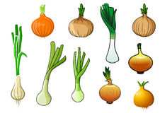 Onion bulbs and leek vegetables Royalty Free Stock Image