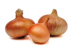 Onion bulbs Royalty Free Stock Photo