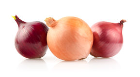 Onion Bulbs on White Background Royalty Free Stock Images