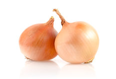 Onion Bulbs on White Background Royalty Free Stock Photography