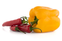 Onion, chilli peppers and parsley Royalty Free Stock Photography