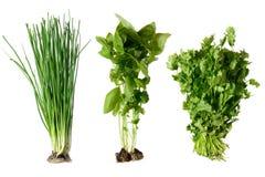 Onion, cilantro and basil Stock Image
