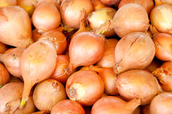 Onion Royalty Free Stock Photos