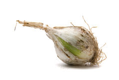 Onion closeup. On white background Stock Images