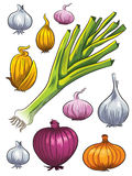 Onion Collection Royalty Free Stock Images