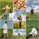 Onion collection Stock Image