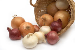 Onion Colorful Onion in the Basket Stock Photography