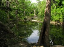 Onion Creek. Royalty Free Stock Photography