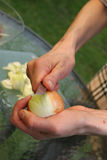 Onion cutting Stock Images
