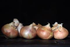 Onion on a dark background Stock Photo