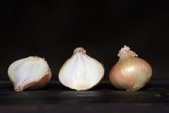 Onion on a dark background Stock Image