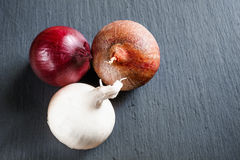 Onion on dark gray stone surface. With copy space Stock Photography