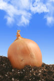 Onion on dirt stock images