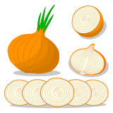 Onion drawing consisting of tag Stock Photo