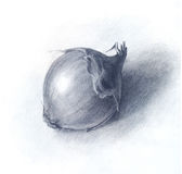 Onion drawn by pencil, hand drawn sketch.  Royalty Free Stock Photos